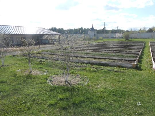 Sivuluostarin puutarhaa. Kanalassa on parikymmentä kanaa. Marjapensaat ja hedelmäpuut ovat hiljattain istutettuja. (Phto: Aristarkos Sirviö)
