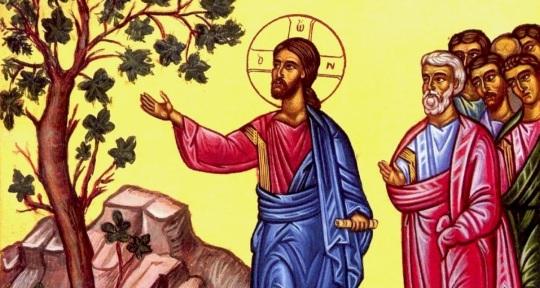 """(Matt.21:18-22) Kun Jeesus varhain aamulla oli palaamassa kaupunkiin, hänen tuli nälkä. Hän näki tien vierellä viikunapuun ja meni tutkimaan sitä, mutta ei löytänyt siitä muuta kuin lehtiä. Silloin hän sanoi puulle: """"Ikinä et enää tee hedelmää."""" Siinä samassa viikunapuu kuivettui. Kun opetuslapset sen näkivät, he hämmästyivät ja sanoivat: """"Kuinka tuo puu noin äkkiä kuivettui?"""" Jeesus vastasi: """"Totisesti: jos teillä olisi uskoa ettekä epäilisi, te ette ainoastaan tekisi tätä viikunapuulle, vaan te voisitte sanoa tälle vuorellekin: 'Nouse paikaltasi ja paiskaudu mereen', ja niin tapahtuisi. Mitä tahansa te uskossa rukoillen pyydätte, sen te saatte."""" (Ikonikuva/Photo: Orthodox.net)"""