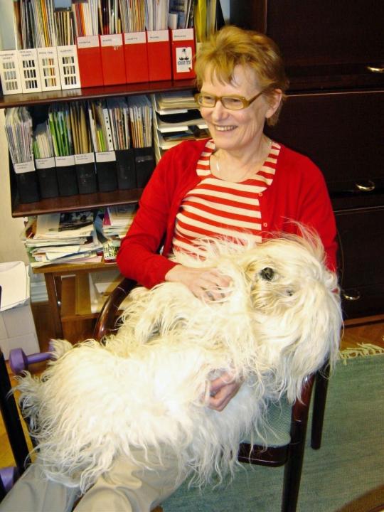 Pieni Valkea Koirakin oppi nopeasti viikonloppuisin tehtäviin taottoihin. (kuva/Photo: Hellevi Matihaltin kuva-arkisto)