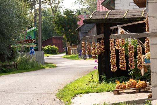 Sipulinkasvatus ja kalastus on vanhauskoisten perinteinen toimeentulon lähde. Elo-syyskuussa kylissä on kesän sato myytävänä. (Kuva/Photo: Peipsimaan matkailu)