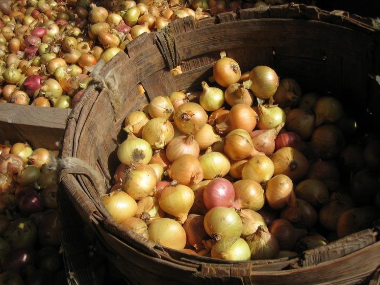 Elokuussa alkaa sipulitien kylissä sipulikausi. Tarjoa on kuuluja vanhauskoisten sipuleita, joita saavutaan ostamaan matkojen päästä. (Kuva/Photo: Peipsimaan matkailu)