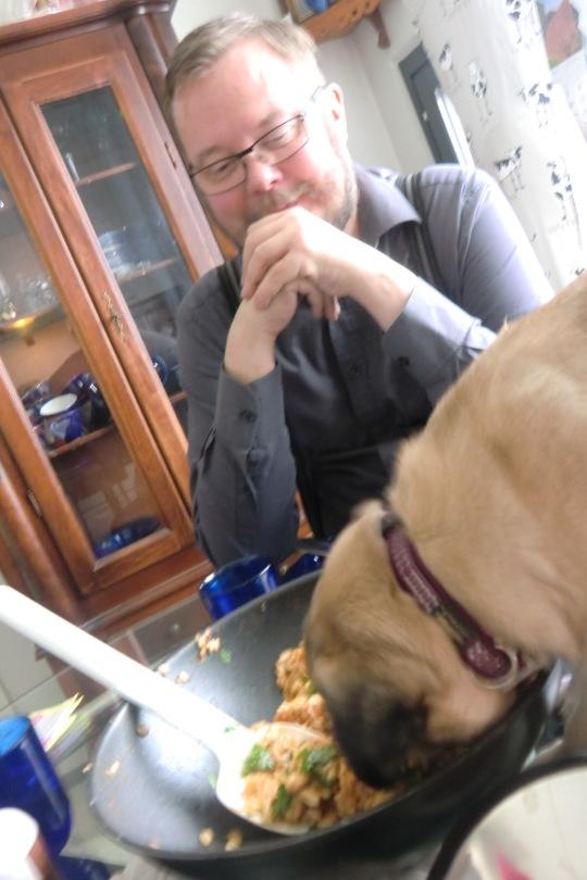 Mopsineito Tyty havaitsee herkulliseksi ruoan, joka ihmisiltä jäi. (Kuva/photo: Hellevi Matihalti )